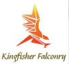 Kingfisher-falconry