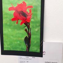 taunton-flower-show-4